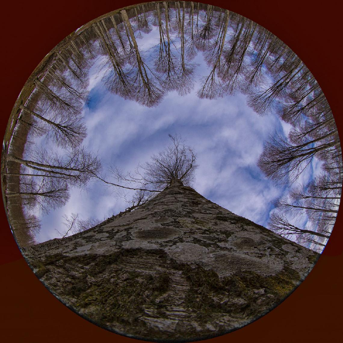 Çataldağ Ormanından