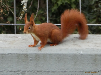 my first squirrel photo