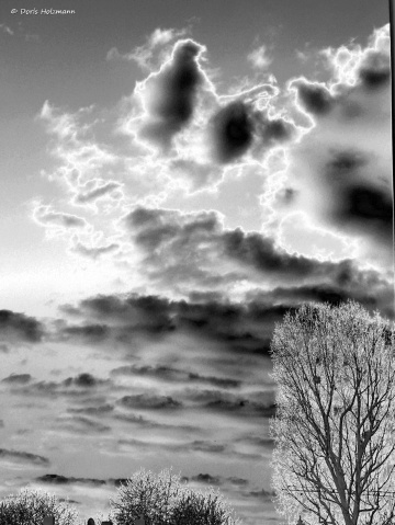 sky with trees