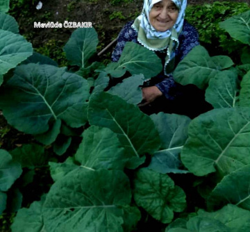 86 yaşında annem ve yetiştirmiş olduğu kara lahana