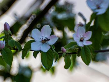 Çiçekler ve Arı