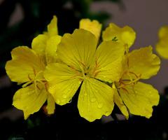 Bahçemin Çiçekleri