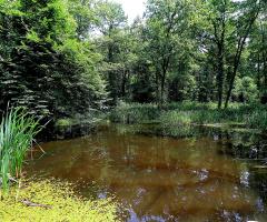 Ormanda Göl