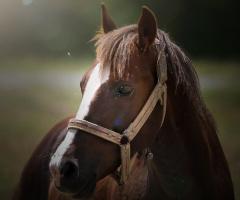 Yalnız At
