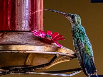 Tempting Bird Feeder Instead Of The Red Stuff