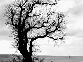 Ben bir ağacım Moda'da.
