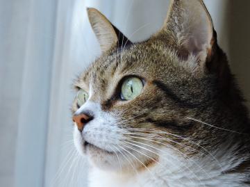 Olhos do gato