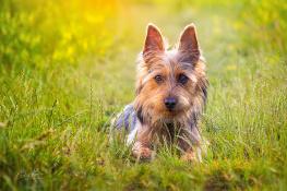 My dog Valko