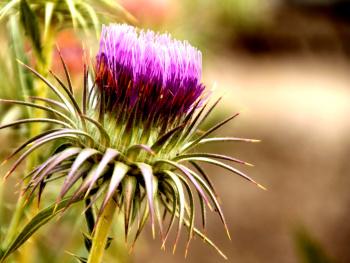 Çiçeği seveceksen,Dikenine katlanacaksın