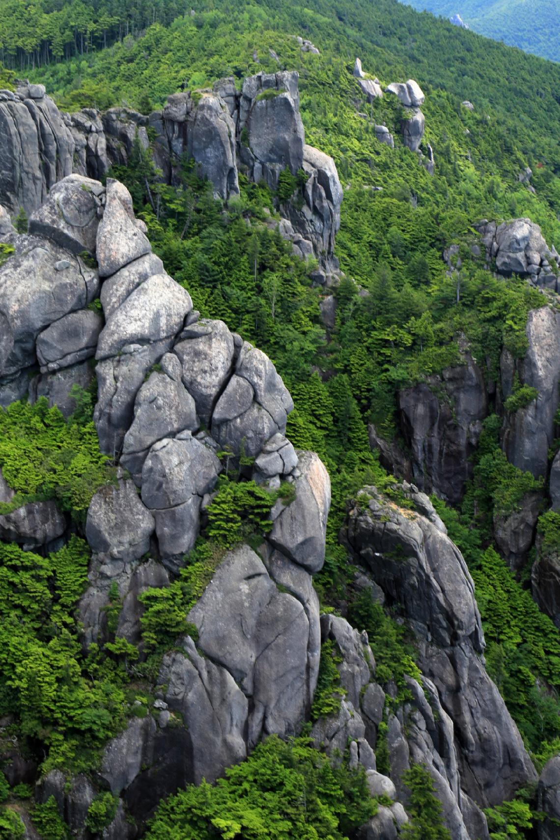 Rocks & green