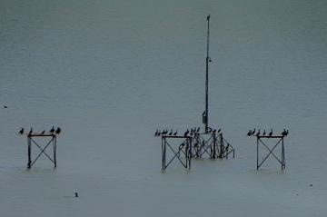 Bandıra Kuş Cenneti