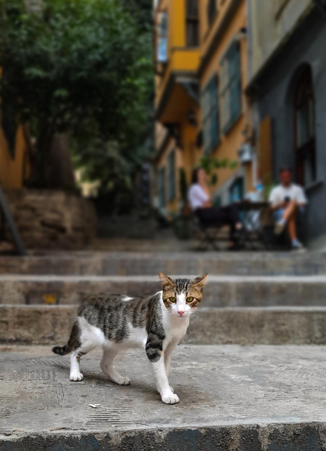 Galata Sokakları