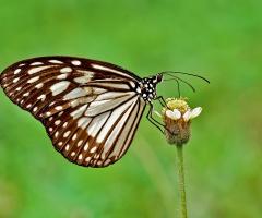 kupu dan bunga liar