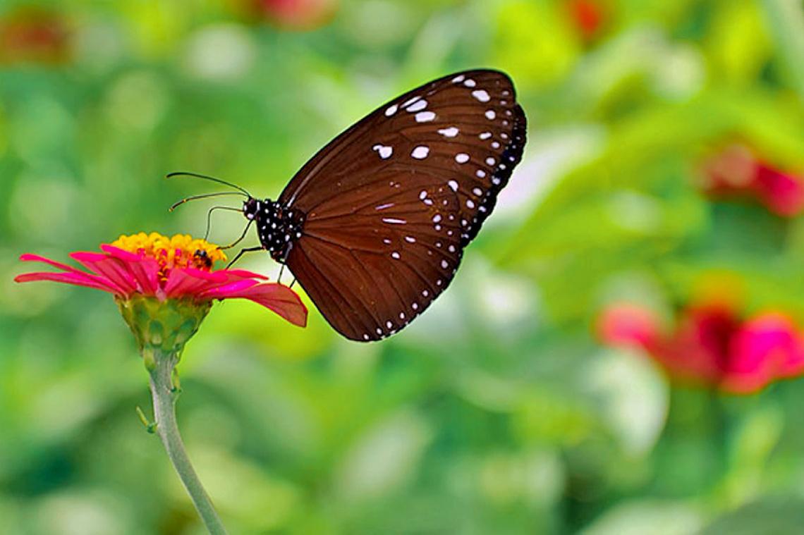 bunga dan kupu