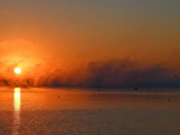 ... birds, Lake Nysa