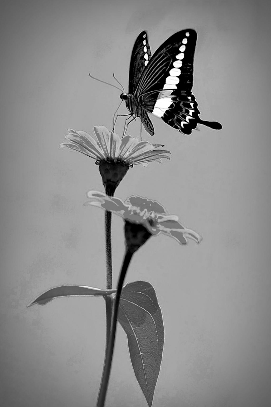 bunga & serangga