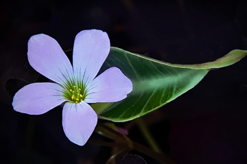 mini flower 02