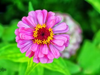 Güzel Günler İçin Olsun Bu Çiçek :))