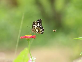 bunga dan serangga