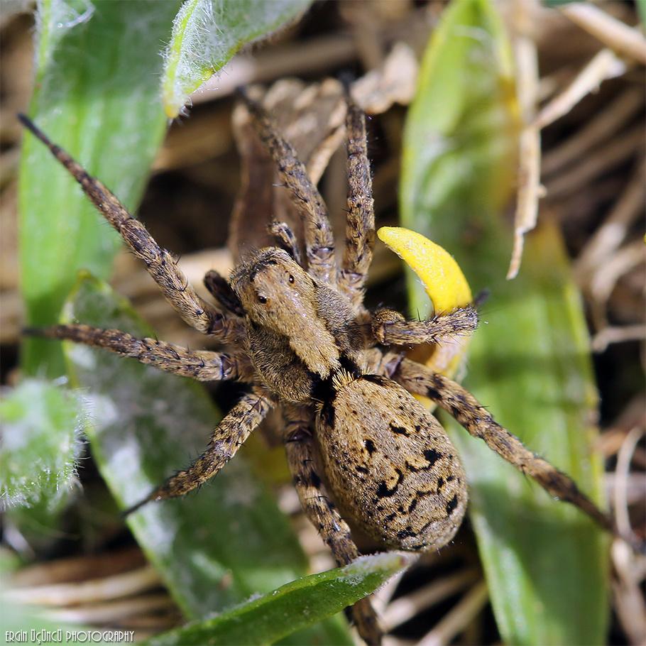 Spider Girl :)