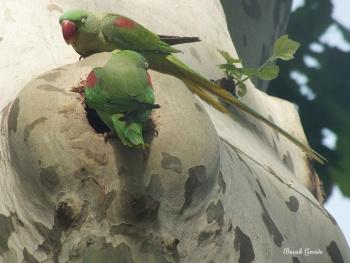 Gülhane Papağanlar Turkey