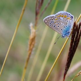 Kelebeğin çok gözlüsü :)