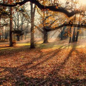 sun rays at autumn